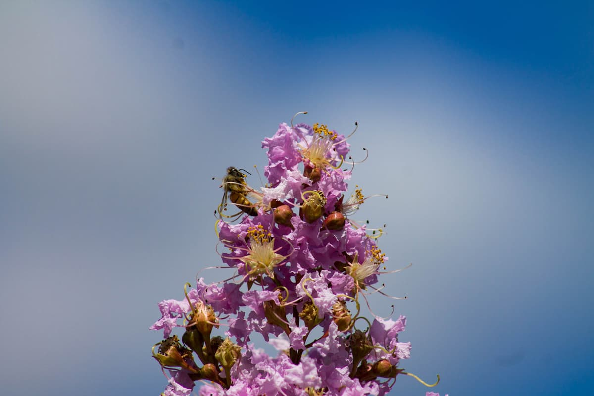 Tribe of the Tree grows flower essence business with cloud inventory management featured image