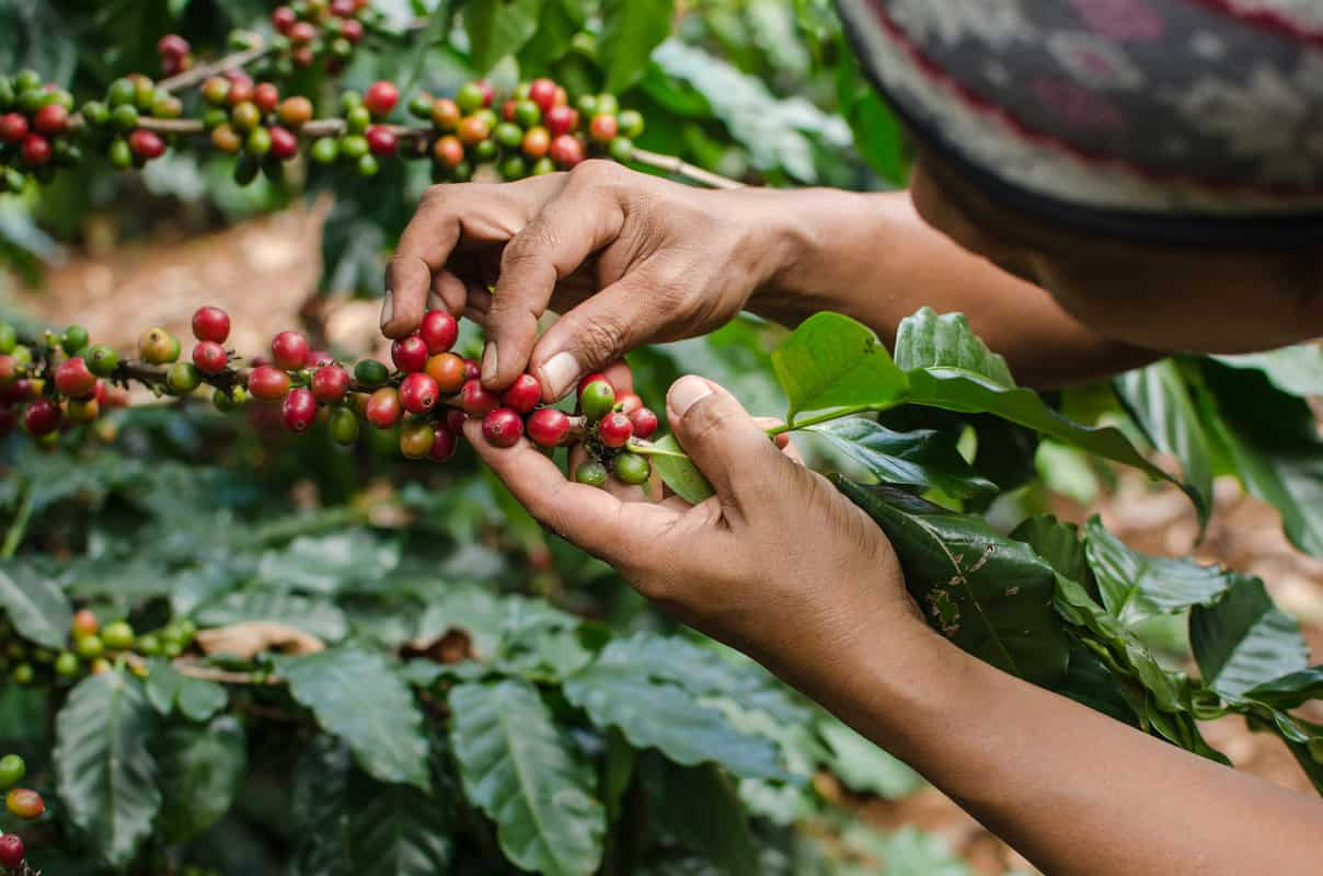 The Remarkable Supply Chain of the Coffee Bean featured image