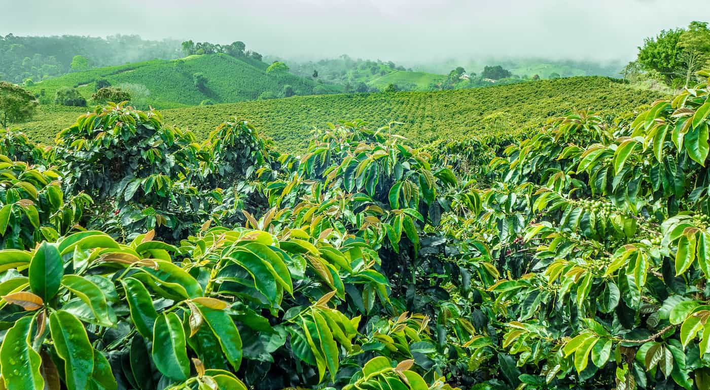 Inventory Management Minimises Waste in the Coffee Industry featured image