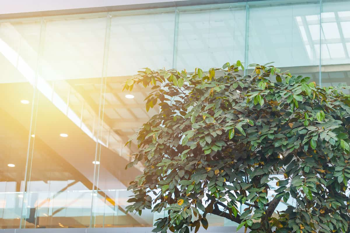 Not If, But When: How to Green Your Supply Chain and Stay Competitive featured image