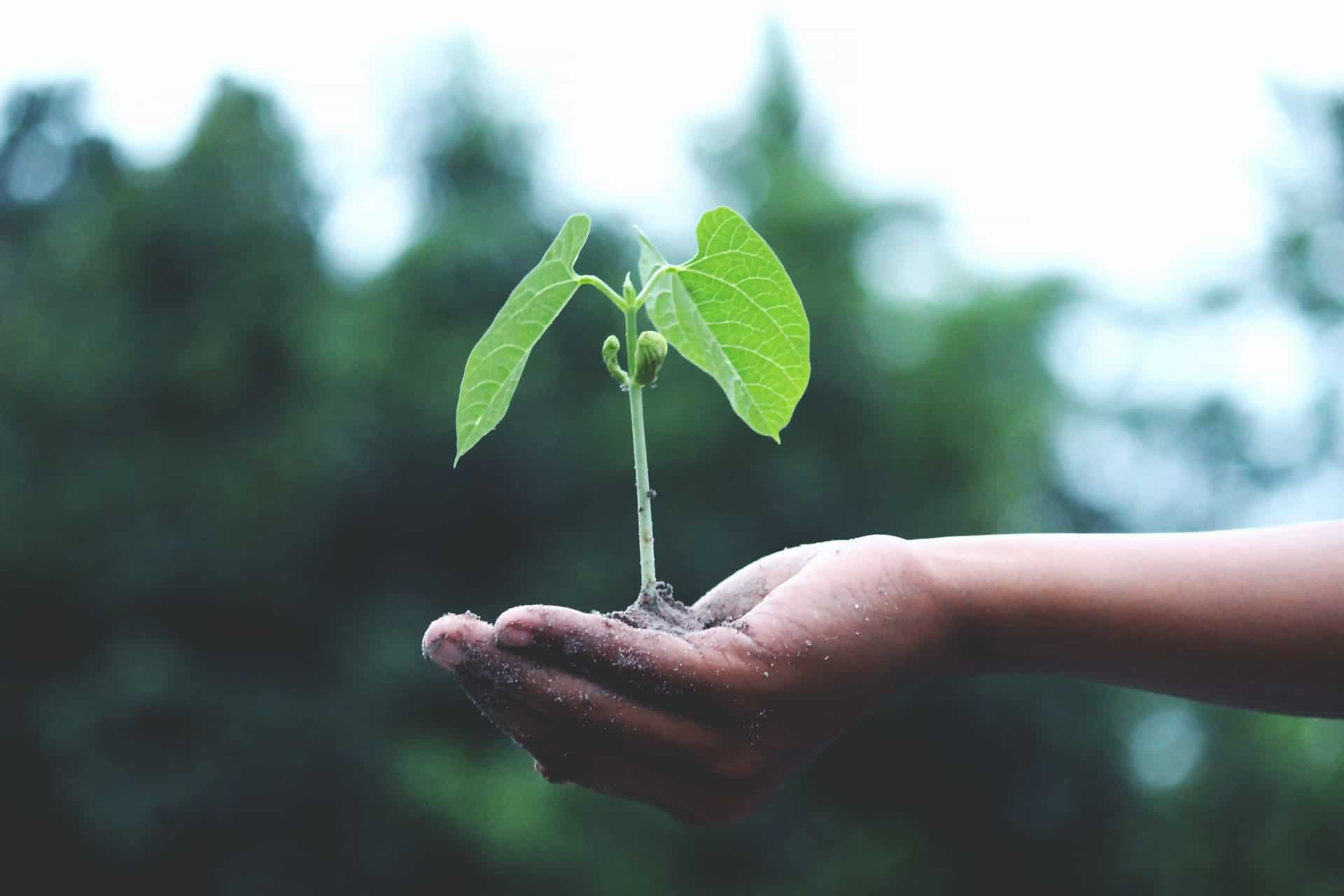 Sustainability Certifications for SME Manufacturers & Products featured image