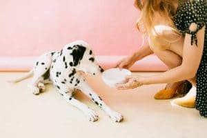 Sustainable pet food packaging