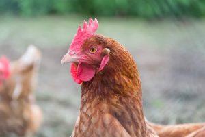 Animal welfare certifications