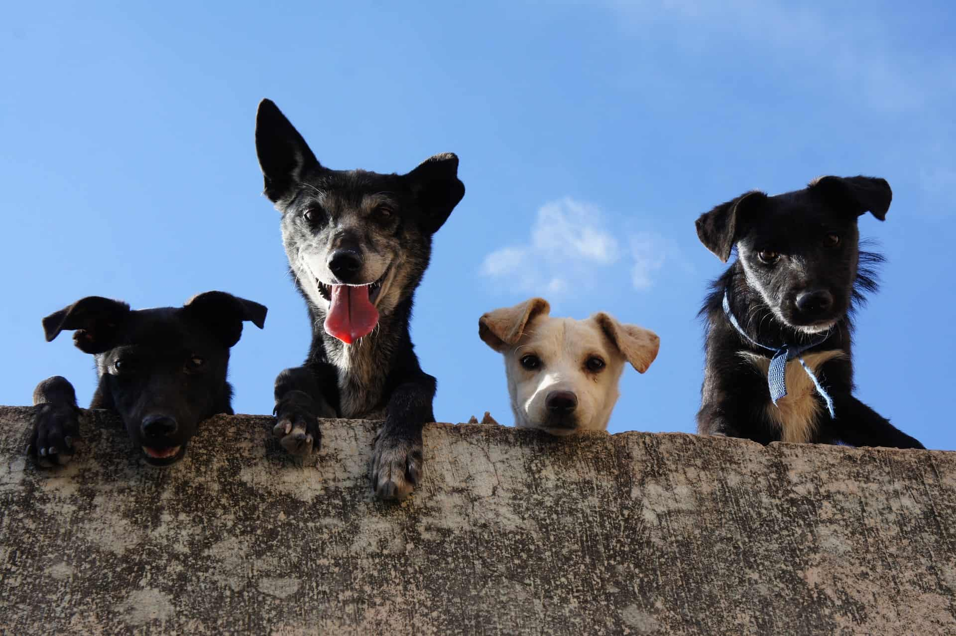 Pet Food Manufacturing and the Pandemic: Inside an Industry Boom featured image